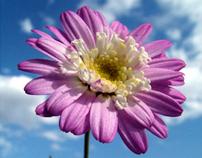 The Floral Portrait Series
