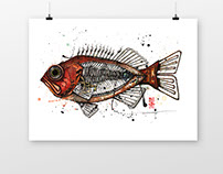 spoonfish