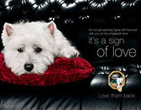 Print & TVC: Cesar - Love them back