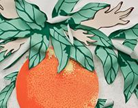 Naranjas y Milagros