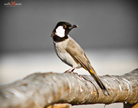 Animal photography ( bird)