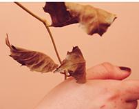 autumn. 2.