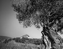 arboreal portraits