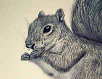 Gray Squirrel Tears