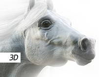 White Horse 3D