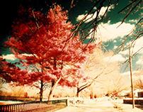 Color Infrared Photography - Conn. & Toronto
