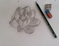 Sketching - Lotus