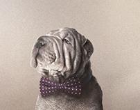 ironed dog