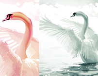 Swan Digital Drawings - by K. Fairbanks