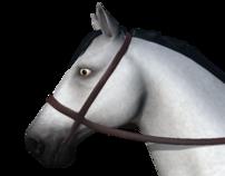 Endurance Race Horse