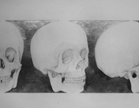 Front, 3/4 & Profile Skull