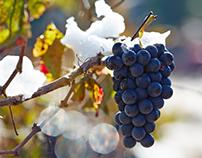 Carmel Winery - Snow on the Vineyards