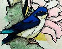golondrina azul