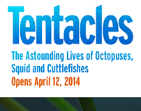 Tentacles Landing Page