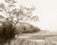 Lowcountry Fine Art Photography II
