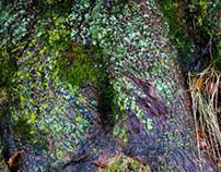 MAGYAN CREATIVE: Treebasing in the Park