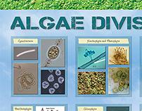 Algae Divisions poster
