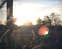 Cinemagraphs / Animated photography - In The Fields