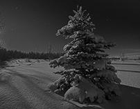 Moon Light Landscapes