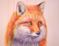 Study of a Fox….
