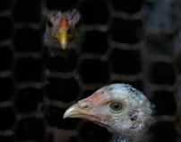 Avian Influenza Preparedness Campaign