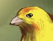 Animais – Ilustração