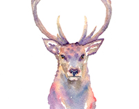 Stag, in Watercolours.