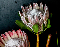 FlowersFleursFiori