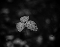 colorless autumn