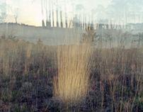 Around the Landscape