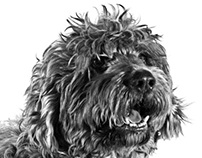 Dog Session - Bilbo