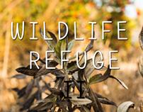 Don Edwards Wildlife Refuge 2