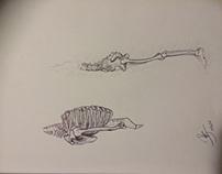 Zack Ross Drawings