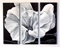 White Magnolia Triptych
