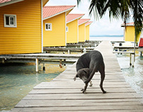 Croatia, Panama & Morocco :: Dogs & Cats