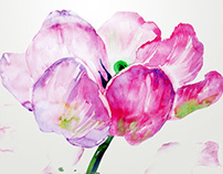 Watercolor tulip