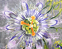 Passion Fruit Flower & Carnivorous Plants Canvas