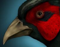 3D Pheasant