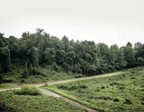 Landscape: Kudzu