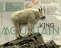 Mountain Goat Infographic