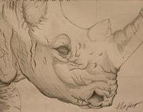 Drawn Rhino.