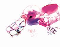 Ornitorrinco / Platypus