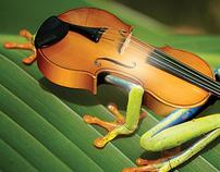 Preserve a música