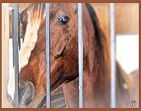 CHEVAUX AVEC COREL 2  /HORSES WITH COREL 2