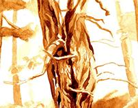 calabrian coffee trees