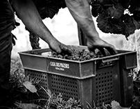 Harvest in Douro