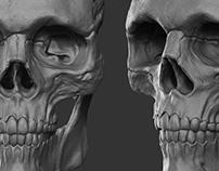 Anatomy - Skull