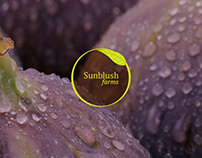 Sunblush farms Branding