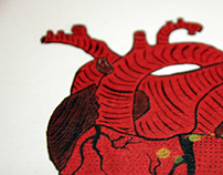 graphic Anatomy / heart