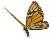 Papillon (2013)